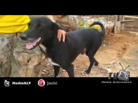 Perro héroe llamado Ping Pong salva a un bebé enterrado vivo